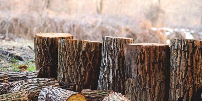 blurred-background-color-dry-9231671.jpg